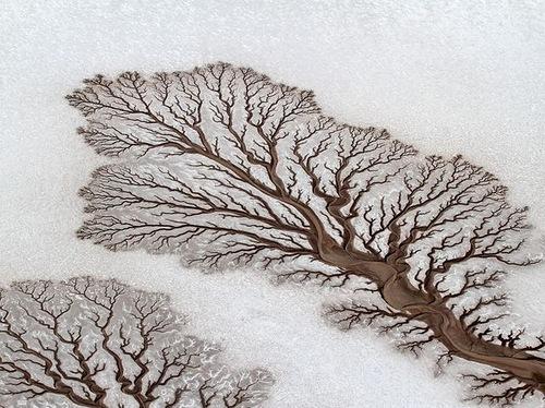 Загадочные деревья появились на Салтовке (ФОТО)