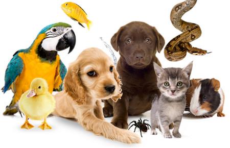 Харьковчанам запретят содержать животных