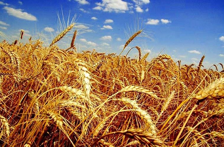 Прокуратура разыскивает владельцев урожая