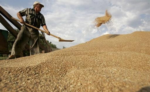 Харьковские аграрии закончили сбор зерна (ВИДЕО)