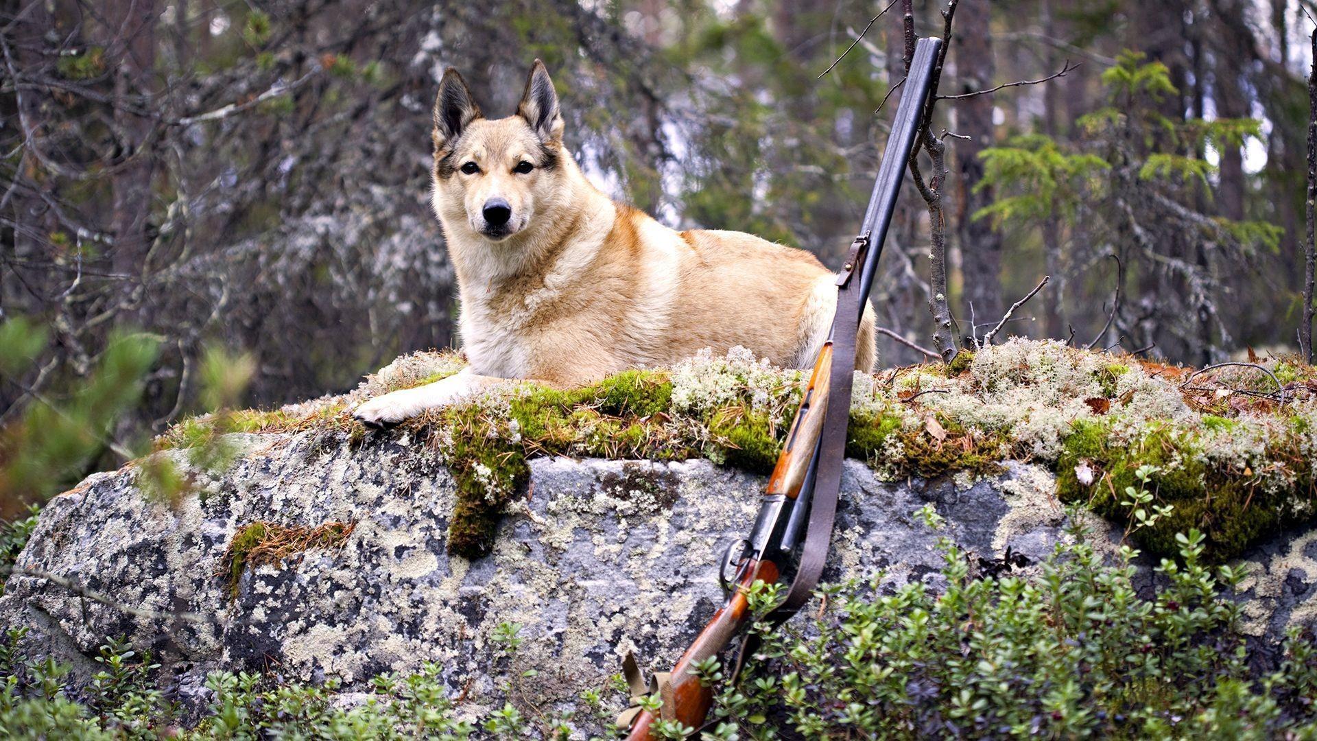 На людей-вредителей откроют охоту (ФОТО)