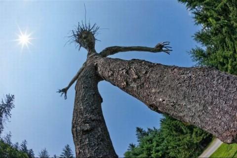 Странные деревья озадачили земляков (ФОТО)