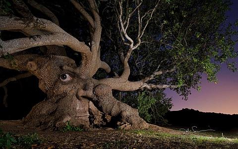 Харьковчанам предлагают превратиться в деревья