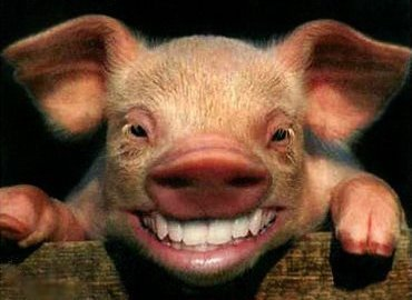 Национальной гвардии подложили свинью на Харьковщине