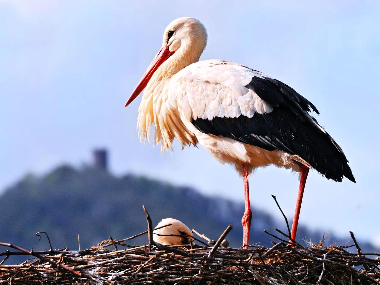 Огромные птицы поселились в харьковских домах (ФОТО)
