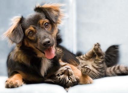 В Харькове владельцам животных хотят предоставить льготы