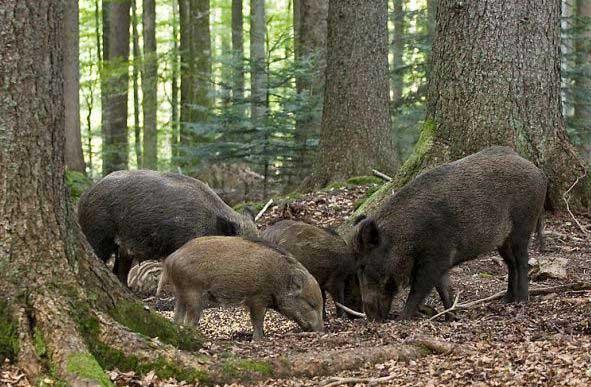 В Харьковских лесах ищут страшную болезнь