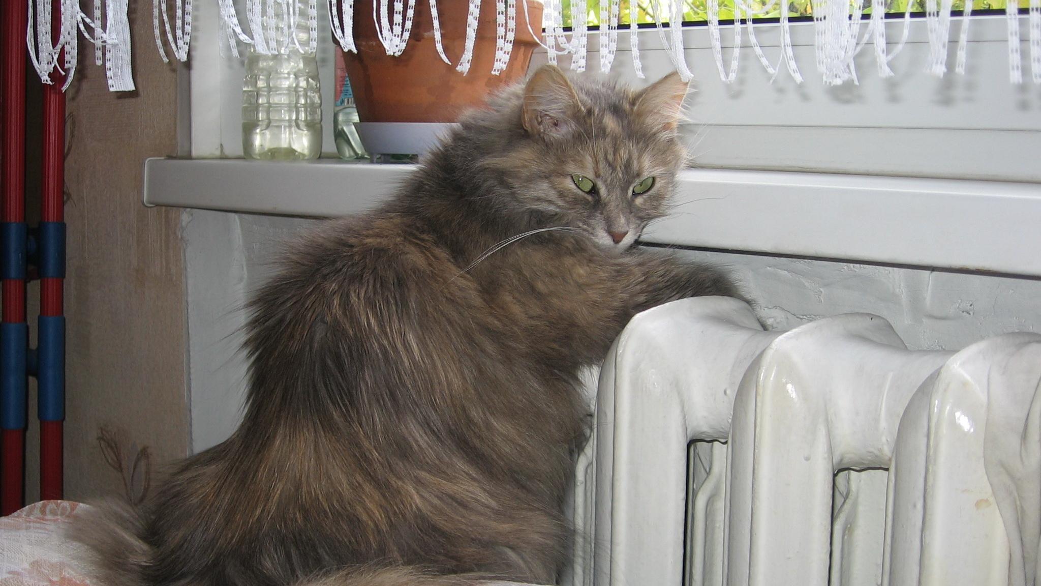 В домах Харькова снова нет отопления