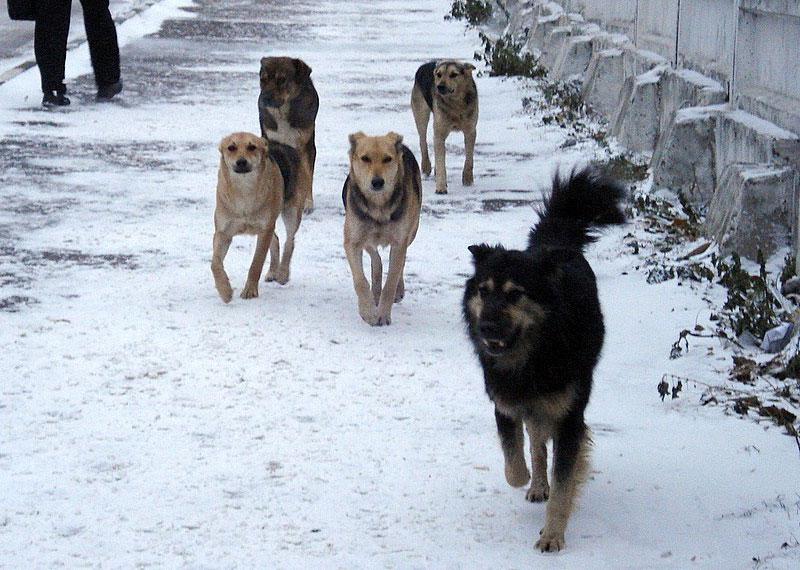 В Харькове устроили охоту на собак, прикрывшись именем нардепа
