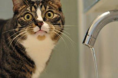 Некоторые харьковчане проведут Крещение без воды в кранах