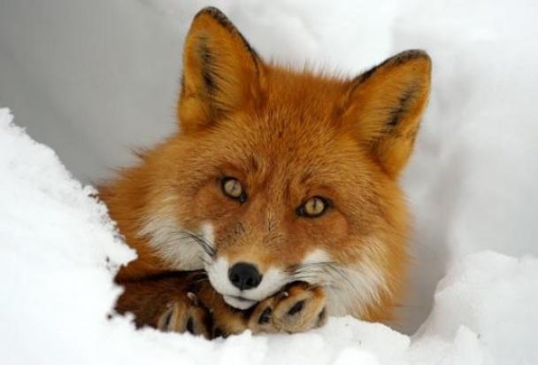 На Харьковщине устроят массовый отстрел животных