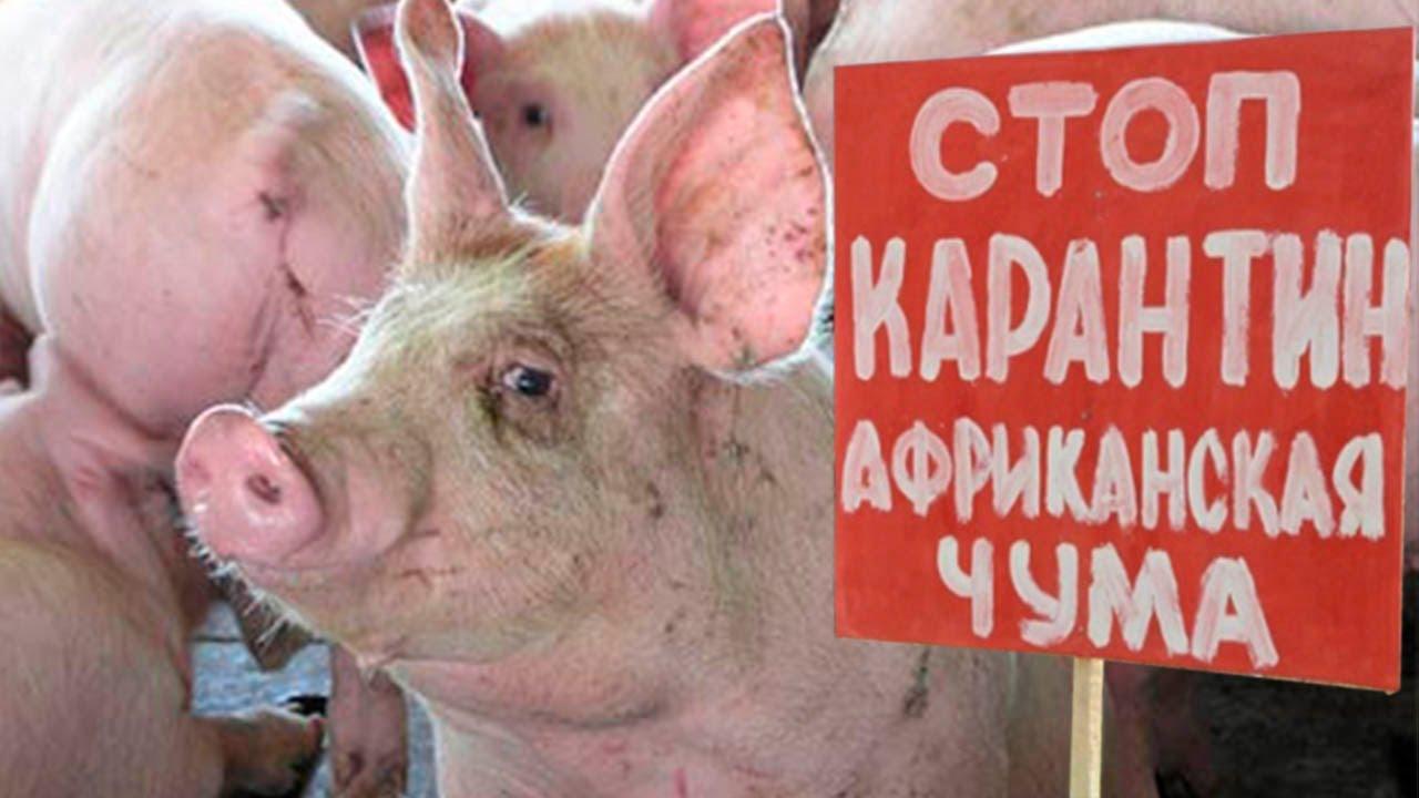 Харьковчанам платят деньги за убитых животных