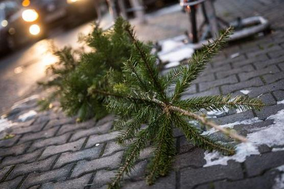 Жители Харькова массово избавляются от красавиц (ФОТО)