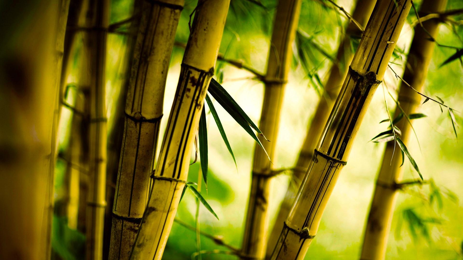 Бамбук принес харьковчанину мировое признание