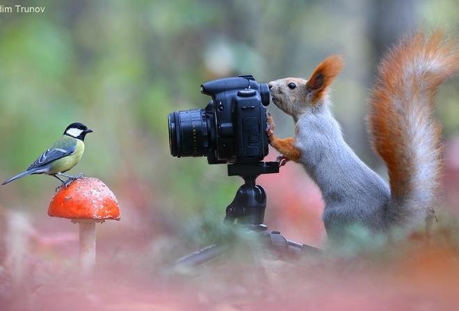 Харьковчане с фотоаппаратами могут получить десятки тысяч гривен