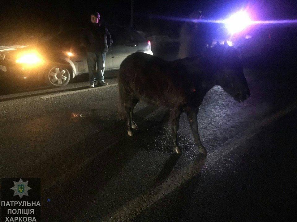Ночью в Харькове под машину бросился необычный зверь (ФОТО)