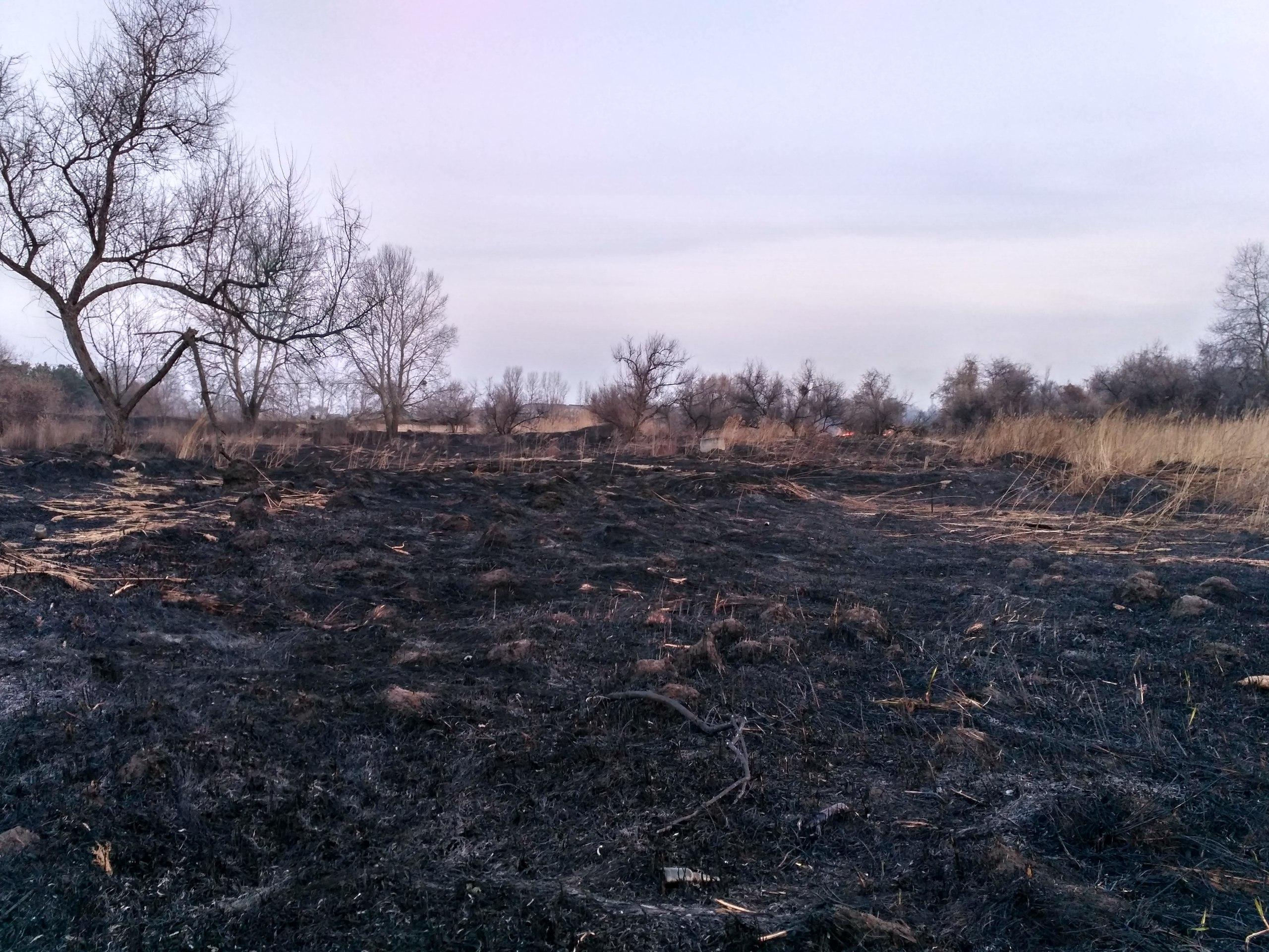 Масштабные пожары накрыли Харьковщину(ФОТО)