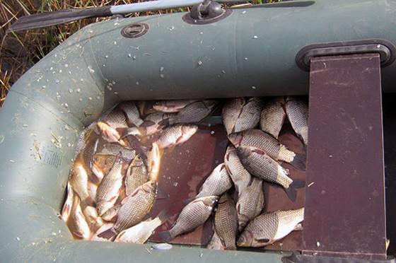 Цена на харьковскую рыбу в ближайшее время изменится