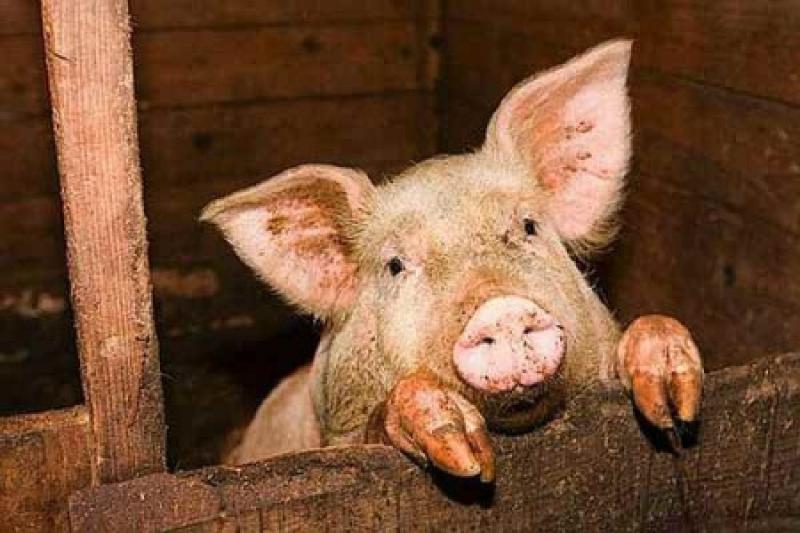 Жители Харьковщины массово вырезают животных