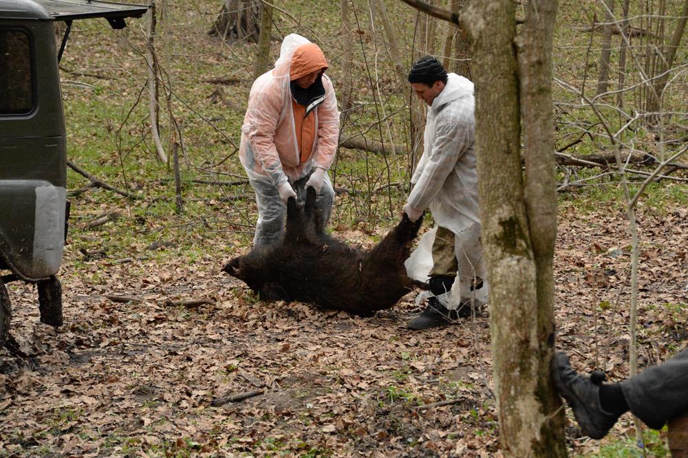 На Харьковщине из-за страшной болезни решили истребить животных