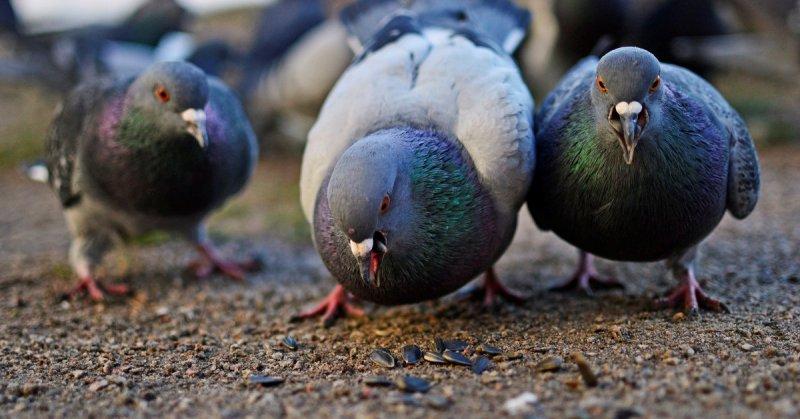 Харьковчанка извела птицу вазелином (фото)