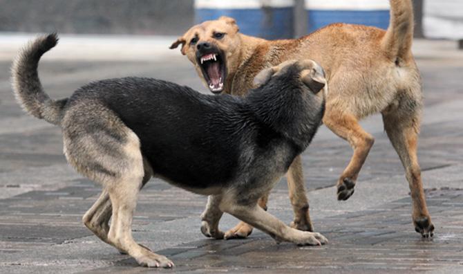 Кернес решил, что делать с бродячими собаками