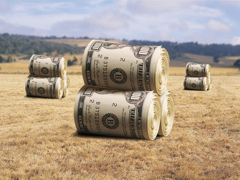 """""""Наши люди будут сидеть без работы"""": харьковские аграрии об отмене моратория на продажу земли"""
