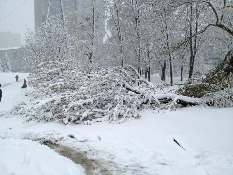 Снежный апокалипсис. В Харькове падают деревья и рвутся провода (фото)