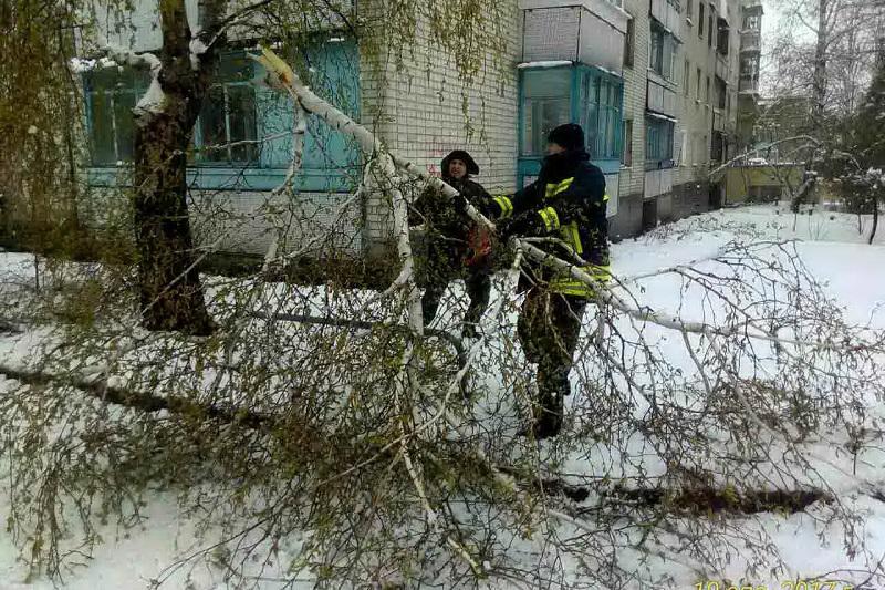 В Харькове массово пилят деревья