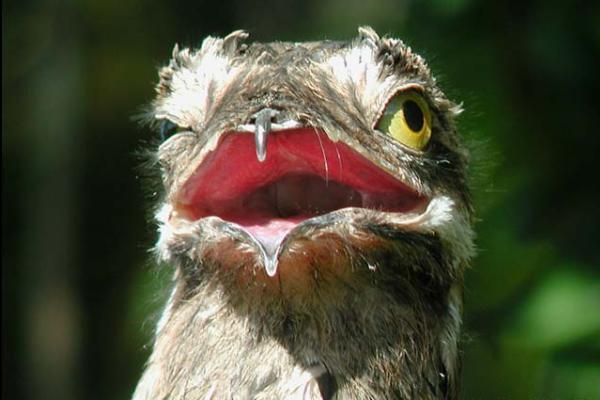 Малолетняя харьковчанка под покровом ночи свернула голову птице (видео)