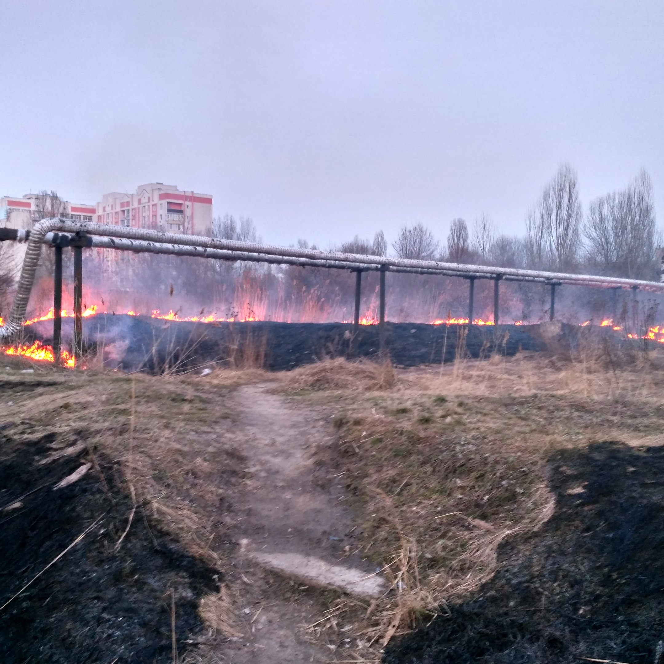 Жители Харьковщины устроили масштабные пожары