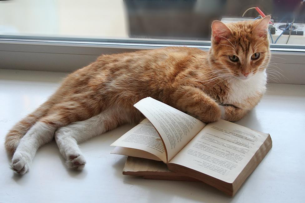 Харьковчан лишили возможности читать книги