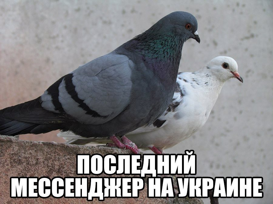 Харьковчанам грозят серьезные штрафы за непослушание