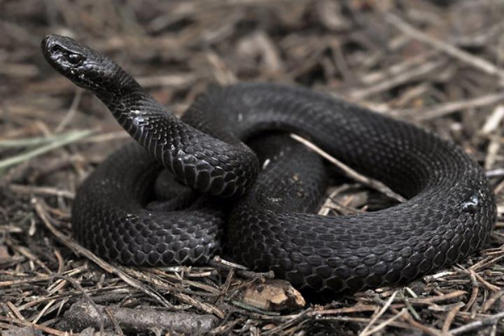 Змея укусила мужчину под Харьковом