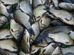 Рыба в Харькове подорожает