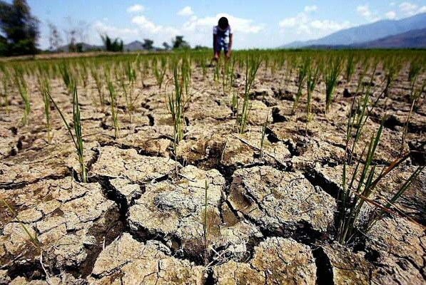 Рекордная засуха обрушилась на Харьковскую область