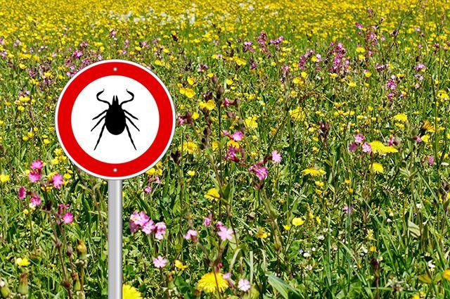 В Харькове бьют тревогу из-за опасных насекомых