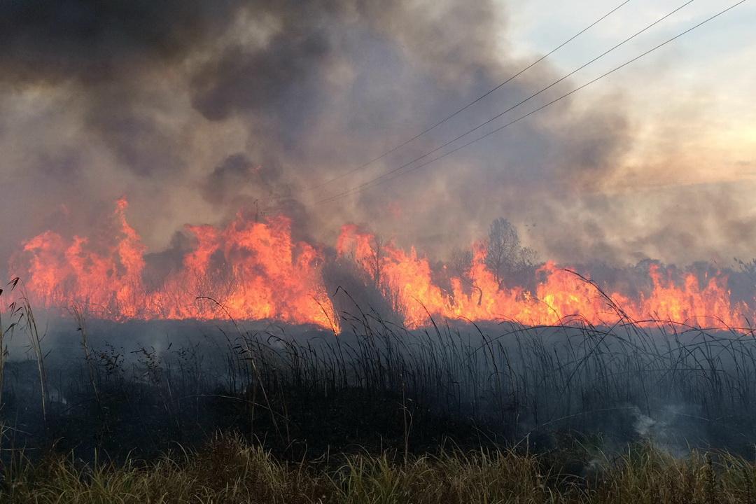 Крупный пожар на Харьковщине. Целое село оказалось в опасности