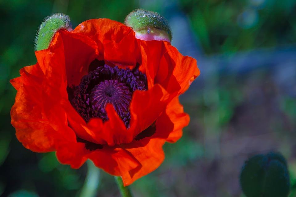 Цветок подставил жителя Харьковщины
