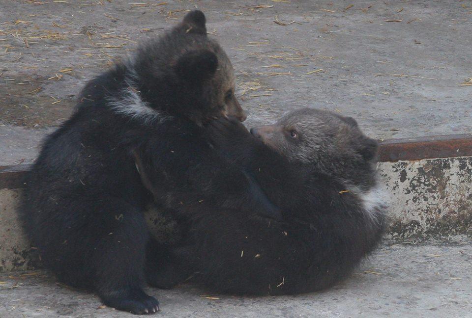 Группа харьковчан предсказала рождение больших существ (фото)