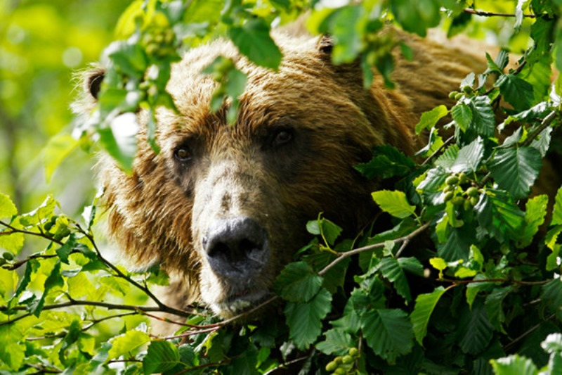 Харьковчане подсели на медвежье лакомство