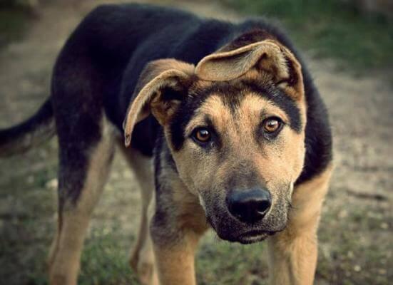 Мужчина изощренно расправился с животным в Харьковской области