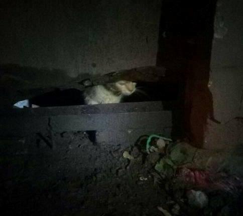 Коммунальщик из Харькова узнал в спасенном пленнике родную душу