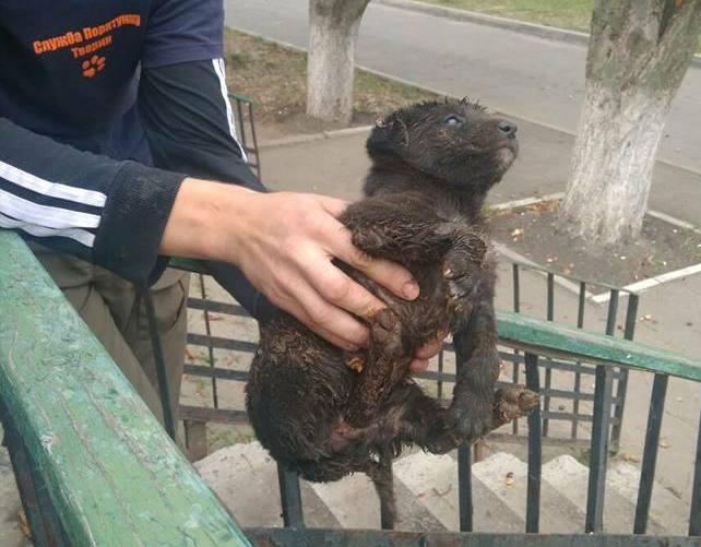 В городке под Харьковом мама сбежала от спасенного малыша