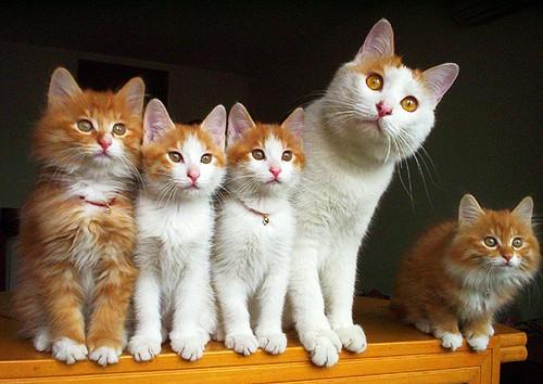 Харьковчан заставят платить огромные деньги за беременных кошек и собак