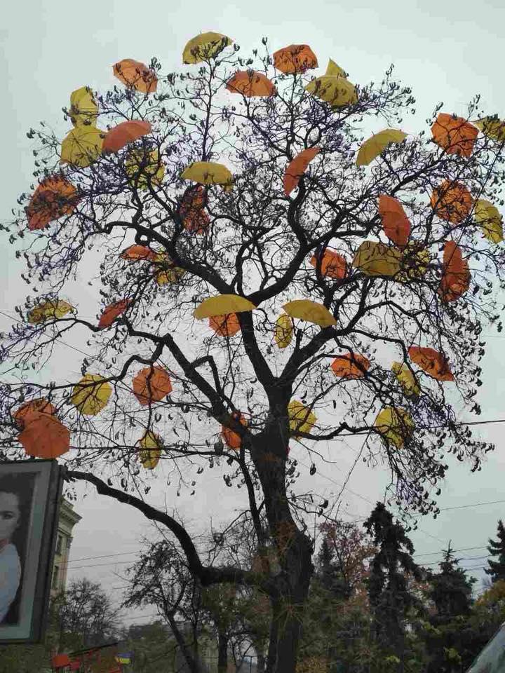 Необычное дерево появилось в Харькове (фото)