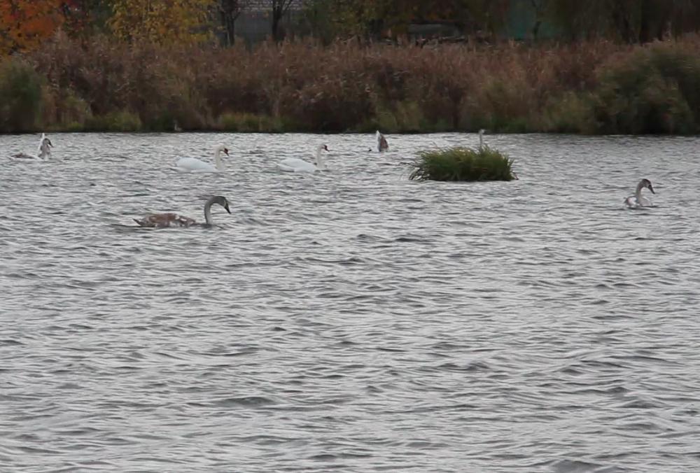Необычная семья поселилась на берегу озера в Харькове (фото, видео)