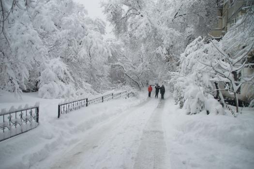 Харьков засыпало снегом (видео)