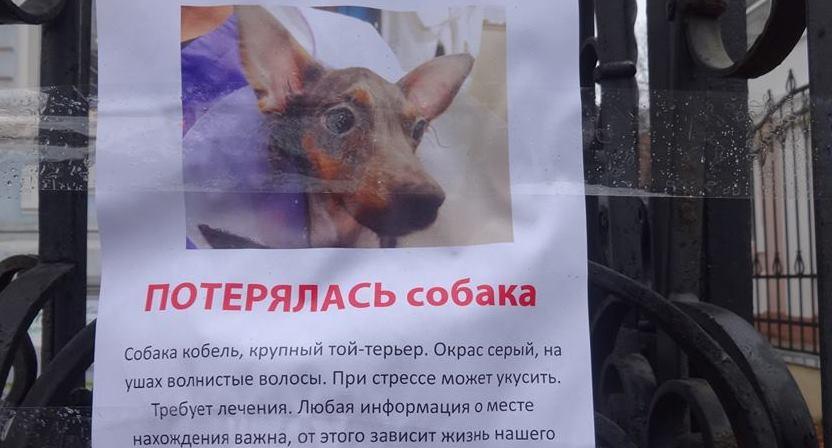 В Харькове всем миром разыскивают смешное существо (фото)