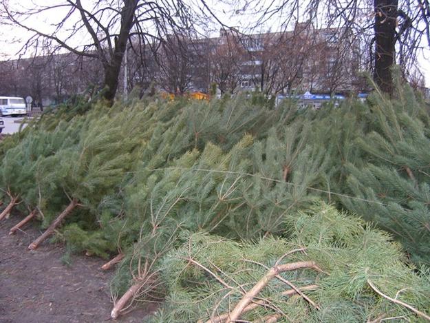 Жуткий запах испортил харьковчанке новогоднее торжество